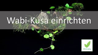 Wabi-Kusa einrichten