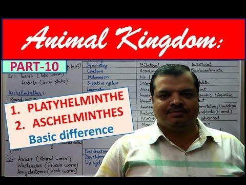Klassifikasi nemathelminthes dan annelida