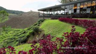preview picture of video 'Cameron Highlands - Malaysia Travel Video - HD 720p'