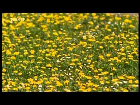 Biene Podmore von chronischer Prostatitis