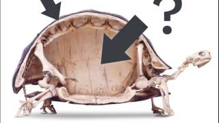 Download Youtube: Could a turtle live outside its shell?