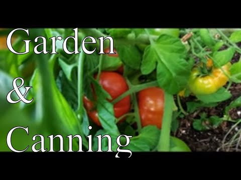 August 2019 Garden Harvest &Canning Update With Linda's Pantry