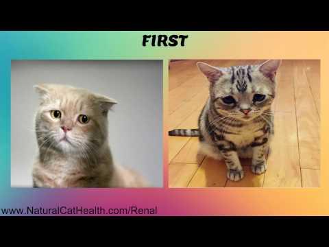 Video Symptoms of Feline Kidney Disease and Natural Solutions