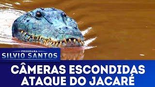 Ataque do Jacaré - Crocodile Attack Prank   Câmeras Escondidas (24/03/19)