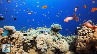 4K Coral Reef Aquarium ~ Relaxing Music for Sleep, Study, Meditation & Yoga •  3 HOURS