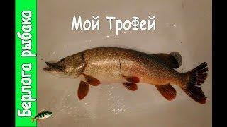 Рыбалка. Щука на 4 кг (на катушку и спиннинг с Алиэкспресс ) Трофейная рыбалка.