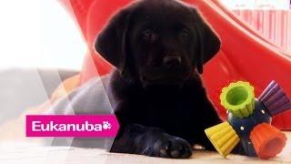 'Hearing' Dog Training - Part 1 | Extraordinary Dogs