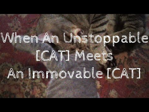 【Big Al, Sonika】 When An Unstoppable [CAT] Meets An Immovable [CAT] 【VOCALOID Original Song】