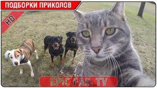 Подборка приколов за Январь 2016 (+18) #16 A selection of jokes for January 2016