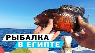 Египет. рыбалка в шарм эль шейхе.