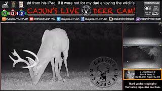Live Deer Cam where Deer Love Deer Candy by Cajun's Cams with Full HD Audio - In Memory of my Dad