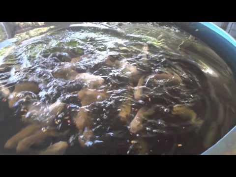 Pondmaster AP-20 Pond and Aquarium Deep Water Pump