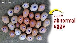 Newcastle Disease Symptoms in laying Hens, Chicken Diseases & Farming