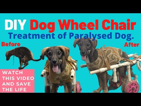 Street Dog Paralysis | Homemade Dog Wheelchair | DIY | Dog Lover | Mukul Chhikara