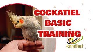Cockatiel training : Basic approach (beginner stage)