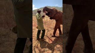animales hora del almuerzo para elefantes huérfanos