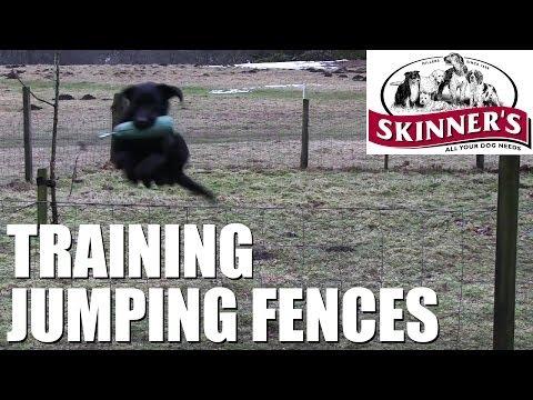 Gundog training tips – Jumping fences
