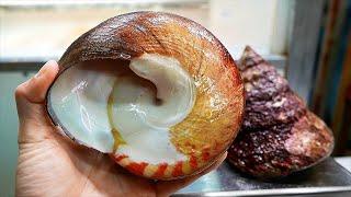 Japanese Street Food - GIANT TOP SHELL Sea Snail Okinawa Seafood Japan