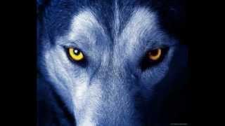Aullido de lobo Real y musica By polo