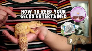 Keeping Your Leopard Gecko Entertained | Reptile Enrichment (Mental & Physical)