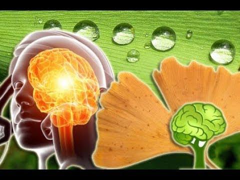Ginkgo verbessert Gedächtnis und Konzentration