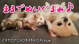 赤ちゃん猫かわいい子犬の面白すぎる添い寝に胸キュン♡