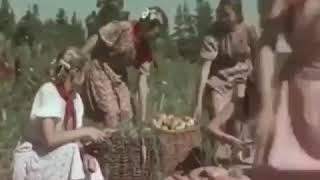 Прекрасный урожай конопли вырастили юные мичуринцы