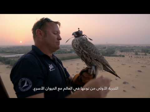 The Journey with Land Rover to create Flying with Falcons