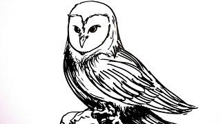Cara Gambar Burung Hantu ฟรวดโอออนไลน ดทวออนไลน คลป