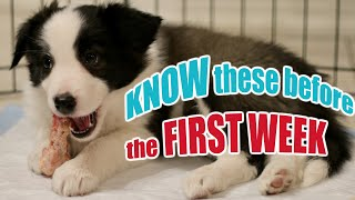 New Puppy Tips: 7 Lessons in 7 Days