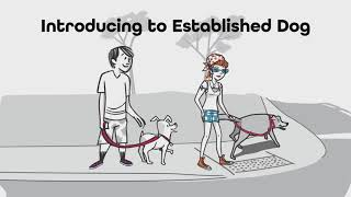 Tips for introducing a new dog to established pets