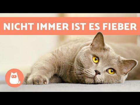 Kalte oder heiße Ohren bei Katzen 🙀 Was bedeutet das?