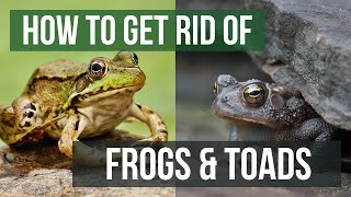 How to Get Rid of Frogs & Toads (4 Easy Steps)