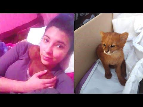 Девушка думала, что спасла невероятно красивого котенка, а тот оказался диким зверем ягуарунди