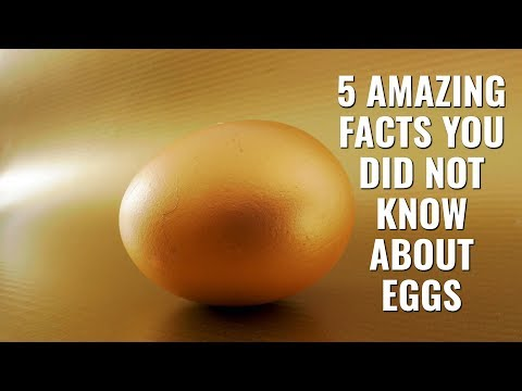 5 Amazing Facts You Did Not Know About Eggs