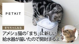 [まちちゃんねる] アメショ猫の「まち」に新しい給水器が届いたので開封するよ。