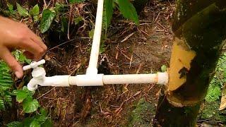 Purifican Agua con Guadua