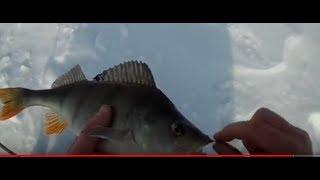 Зимняя рыбалка в средней полосе россии