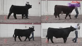 Livestock Judging - MoorMan's ShowTec
