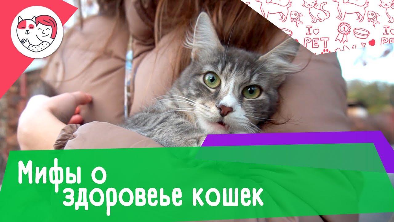 6 мифов о здоровье домашних кошек