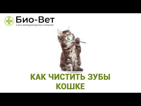 Как чистить зубы кошке 😺 // Нужно ли котам чистить зубы? // Сеть Ветклиник Био-Вет