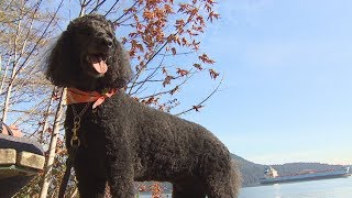 Dogs' deaths prompt warning about toxic mushrooms