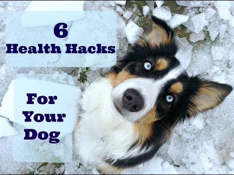 6 Health Life Hacks For Dog Owners |Life With Aspen|
