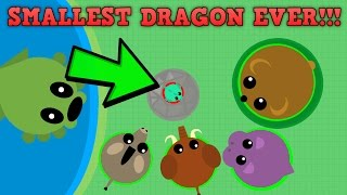 SMALLEST DRAGON EVER WORLDS SMALLEST DRAGON 0XP Mopeio New Update