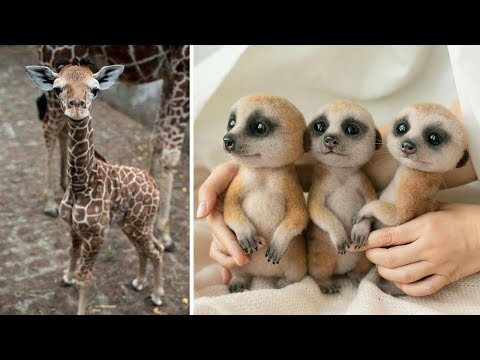 Watch These Young Animals Having the Time of Their Lives!