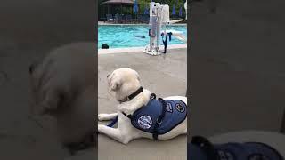 Beamer, Diabetic Alert Dog, during swim class