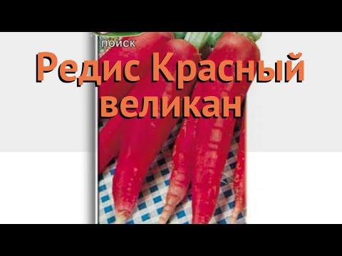 Редис обыкновенный Красный великан 🌿 обзор: как сажать, семена редиса Красный великан