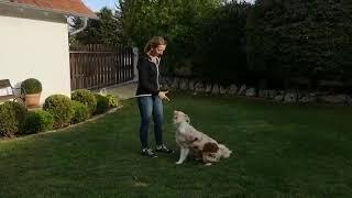 Nachzucht Fly Trickdogging