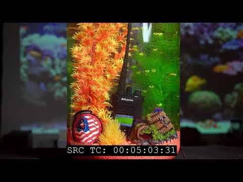 Ailunce HD1 Quick Tour/Review - смотреть онлайн на Hah Life