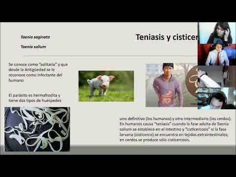 Bélparaziták kezelésére szolgáló gyógyszerek
